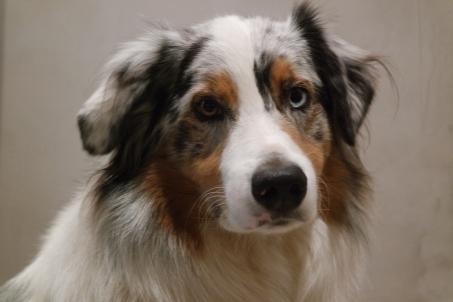Beau - my favorite dog. He's Jane's dog.