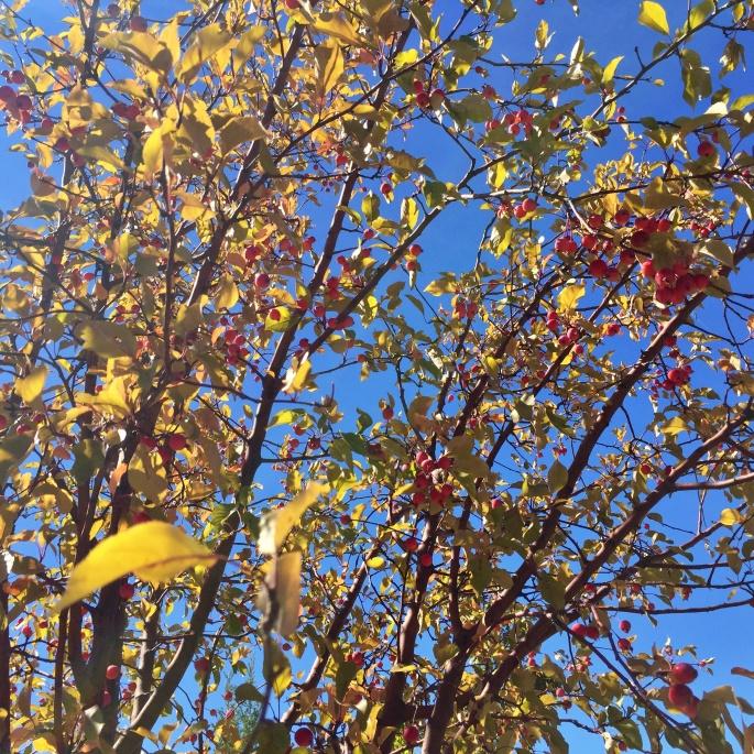 Botanical Gargen