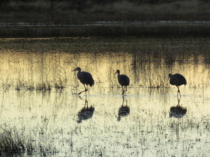 cranes too